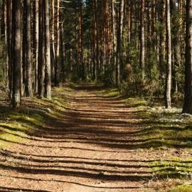Päikeseküllastes metsades leidub ka matkaradu. Ülle Pärnoja foto
