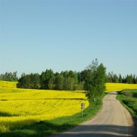 Romantilise Postitee muutumatuna säilinud teejoon ja vahelduvad maastikud.